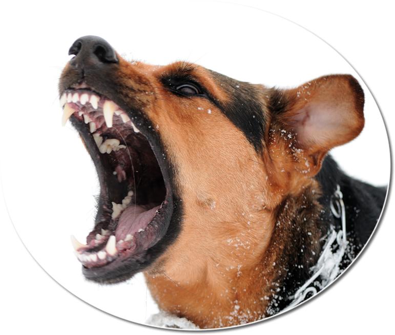 dog-bite-michigan-1